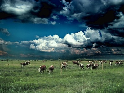 Rain clouds over cattle grazing in a field